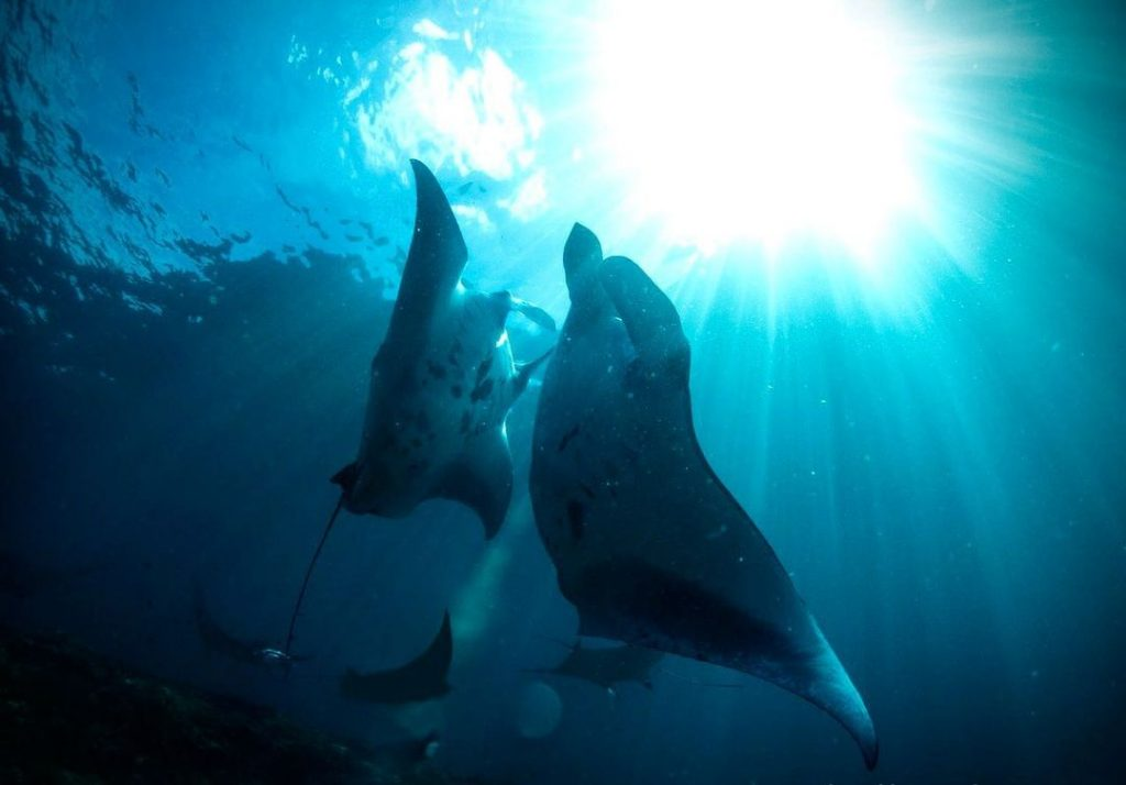 Hanging Out with Gentlest Giants in Manta Point Nusa Penida
