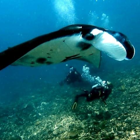 What to Do Next Summer: Exploring the Manta Point Nusa Penida