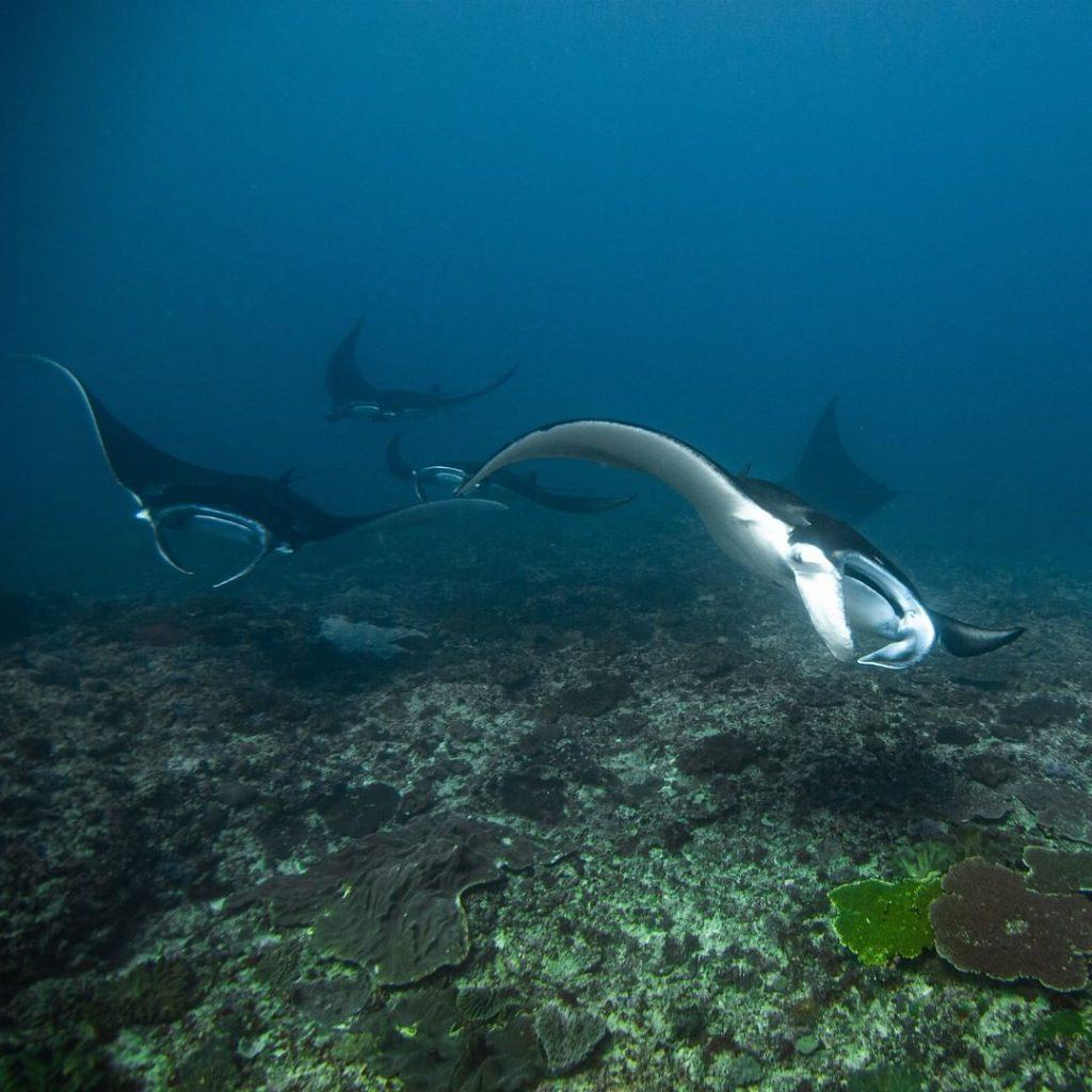 Curious Gentle Giants in Manta Point Nusa Penida